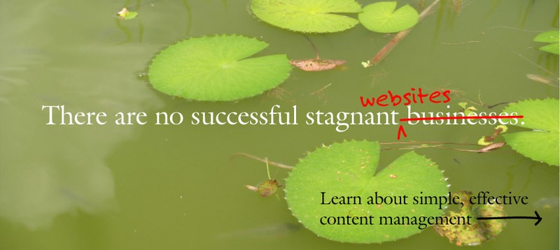 Content Management Systems for Business Websites